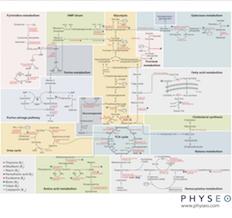 Meta Map