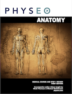 Purchase Anatomy Textbook