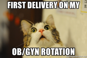 funny cat pic about obgyn